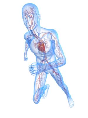 upper extremity arterial duplex interpretation.
